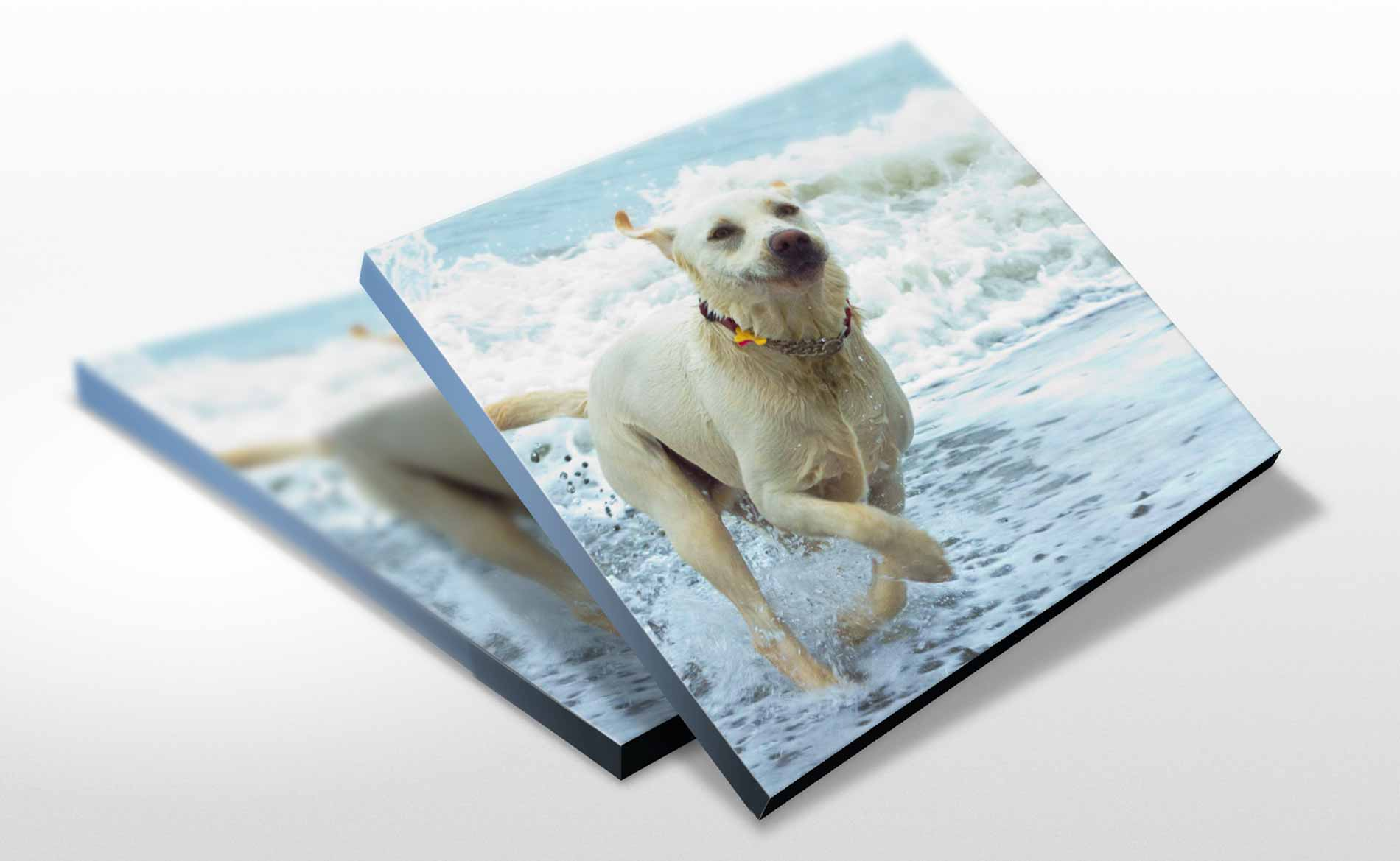 Large Format Print, Animal Portrait Canvas, Canvas Prints, Stoke-on-Trent, Staffordshire